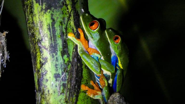 How Amphibians Restore Balance To The Land