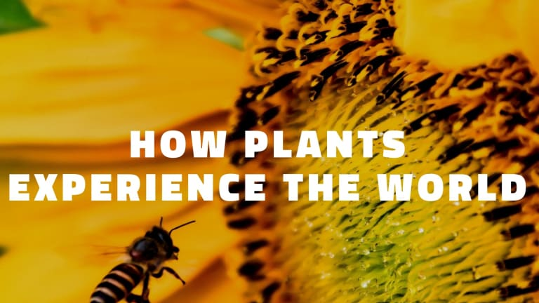How Plants Experience The World