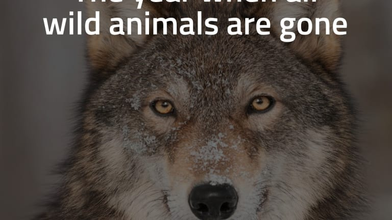Year Zero: The Year When Wild Animals Are Gone