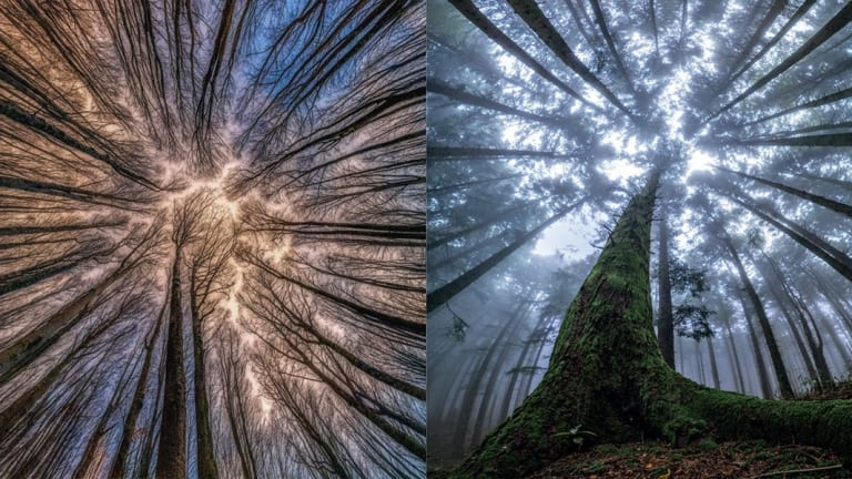 The Magical Beauty Of Looking Up At Trees In The Middle Of A Forest